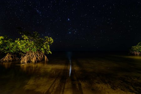 2012-12-02 : Belize Vacation : Coco Plum Island Resort : Mangroves at Night