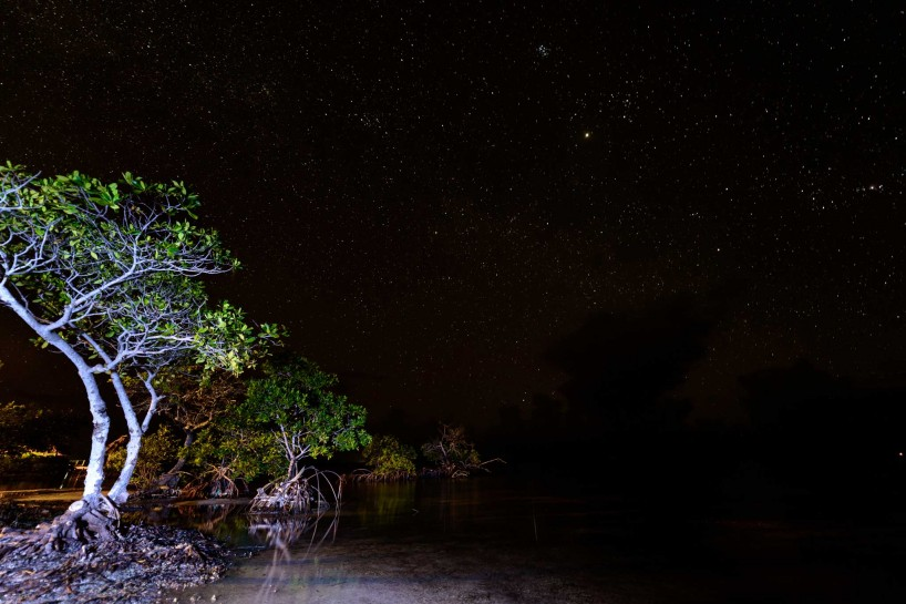 2012-12-02 : Belize Vacation : Coco Plum Island Resort : Mangrove at Night with Light Painting