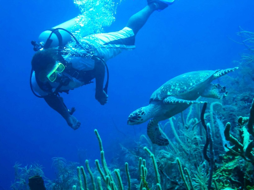 2012-12-05 : Belize Vacation : Scuba Diving : Steve With Green Sea Turtle
