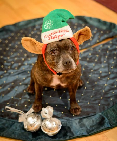 Jammie Christmas 2012 - Dogs dressed up for the holidays