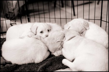 Vancouver Animal Control : Shelter Dogs : Dec 14 2012 (Puppies!)
