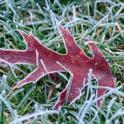 Nikon D800 Macro - Frosty Morning - Lawn