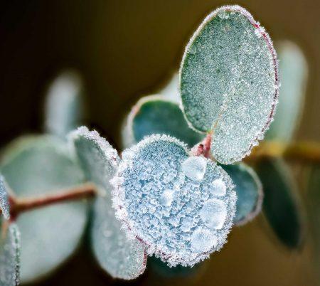 Nikon D800 Macro - Frosty Morning - Focus Stack Leaf