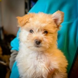 Shelter Dogs Vancouver: 2013-02-22 : Puppy