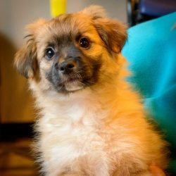 Shelter Dogs Vancouver: 2013-02-22 : Puppy 4