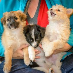 Shelter Dogs Vancouver: 2013-02-22 : Puppies