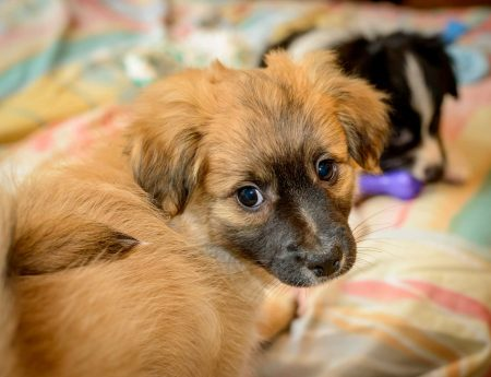 Shelter Dogs Vancouver: 2013-02-22 : Puppy 7