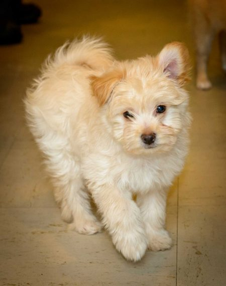 Shelter Dogs Vancouver: 2013-02-22 : Puppy 6