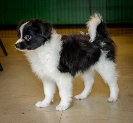 Shelter Dogs Vancouver: 2013-02-22 : Puppy 9
