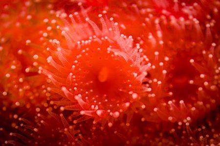 2013-02-20 : Vancouver Aquarium : Up close