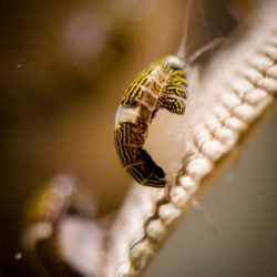 2013-02-20 : Vancouver Aquarium : Louse?