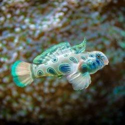 2013-02-20 : Vancouver Aquarium : Beautiful fish