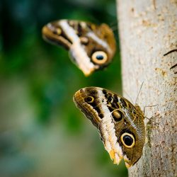 2013-02-20 : Vancouver Aquarium : Butterfly on Tree