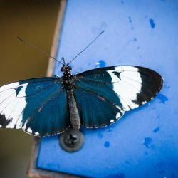 2013-02-20 : Vancouver Aquarium : Butterfly on sign
