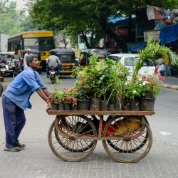 2012 Oct : Mumbai India Visit : Flower Cart