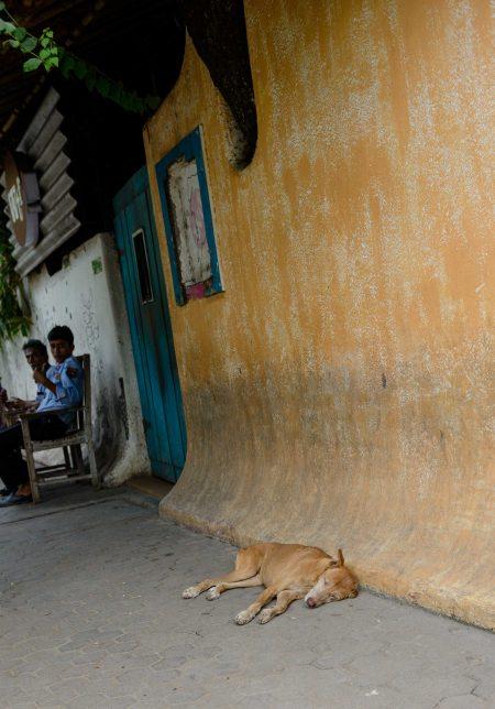 2012 Oct : Mumbai India Visit : Skinny Dog