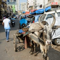 2012 Oct : Mumbai India Visit : Ox Cart