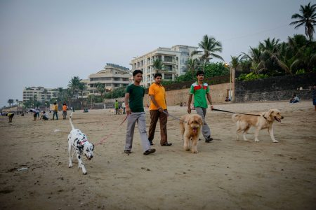 Oct 2012 : Mumbai Visit : Vijayadashami Festival dogs