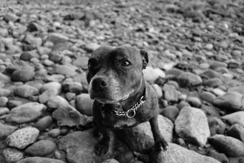 Sony RX100 Black and White : Jammie Beach : Camera JPG