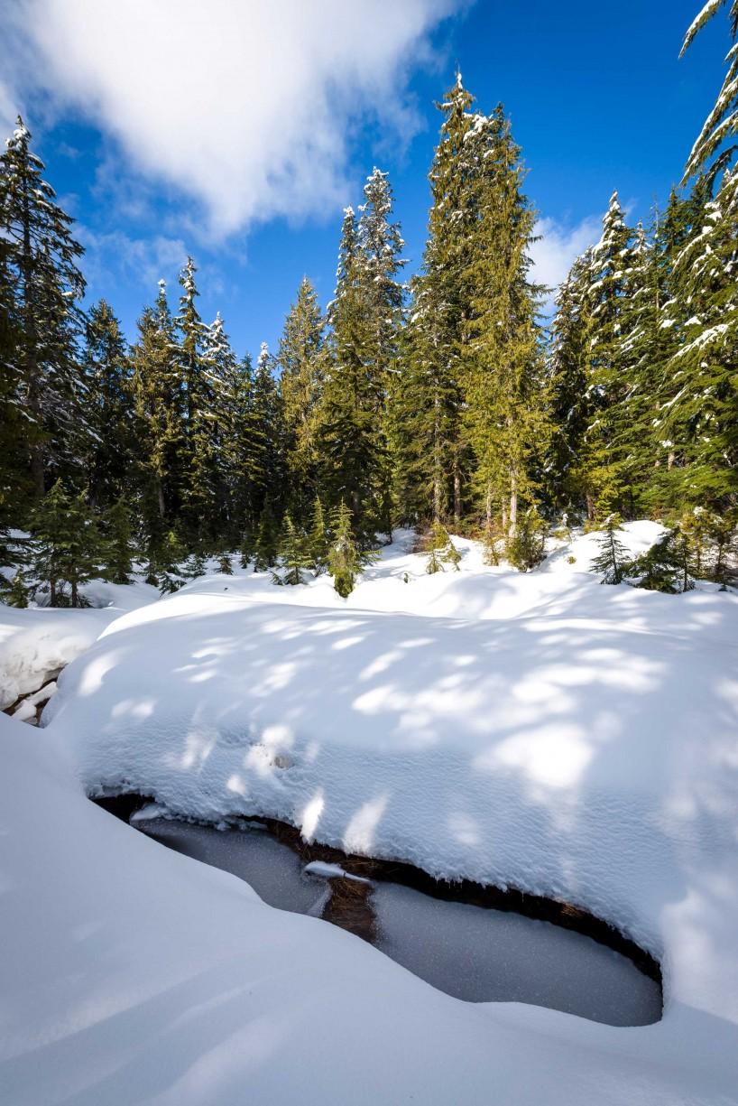Cypress Mountain Snowshoeing 2014-03-20: Deep Snow