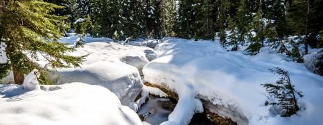 Cypress Mountain Snowshoeing