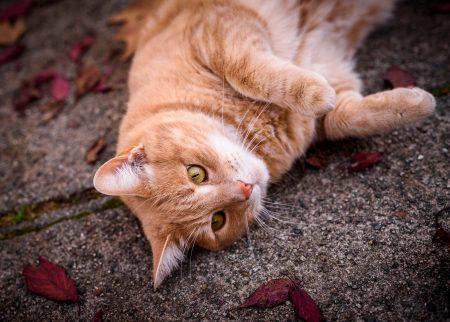 2015-10-20 Cat at 4K Res