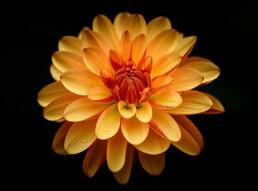 Garden Flower - Orange