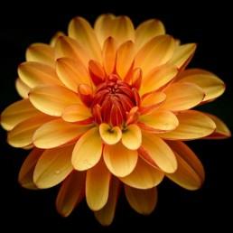 Orange Flower Post Retina 2X Plugin