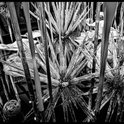 Dale Chihuly Glass Art : 2013-01-05 : Display black and white 2