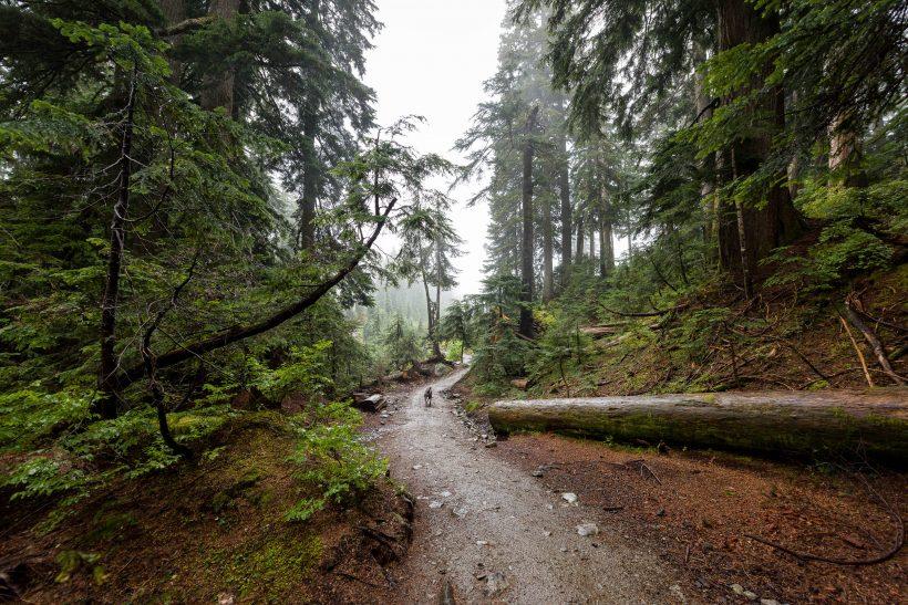 Saint Marks Summit Hike - Sept 2016 - Trail
