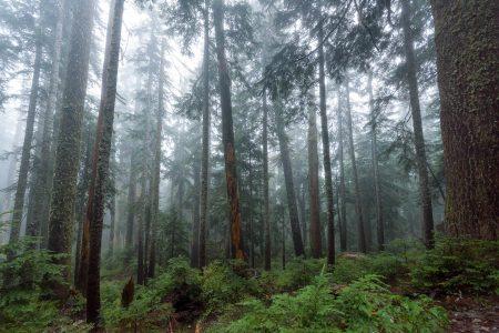 Saint Marks Summit Hike - Sept 2016 - Foggy Trees