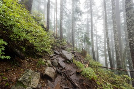 Saint Marks Summit Hike - Sept 2016 - Trail Conditions and Dog