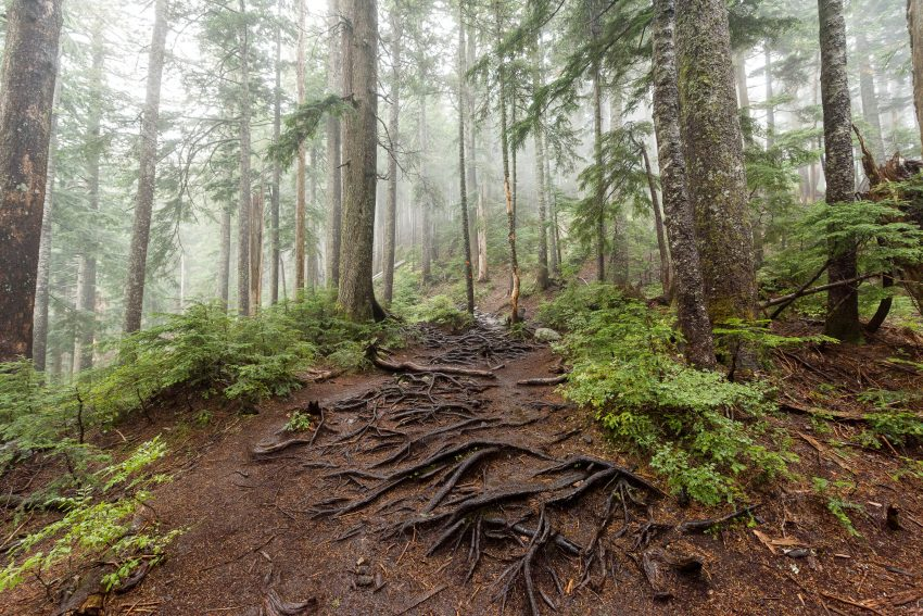Saint Marks Summit Hike - Sept 2016 - Trail Conditions