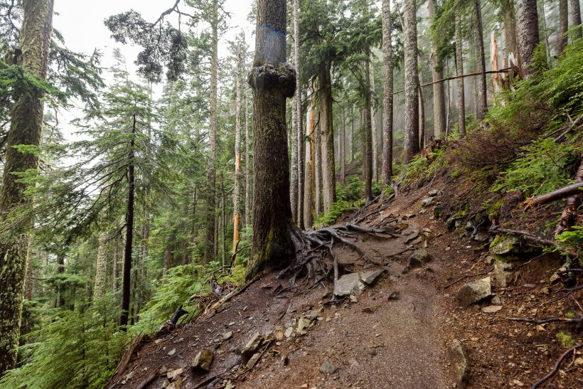 Saint Marks Summit Hike - Sept 2016 - Trail Conditions 2