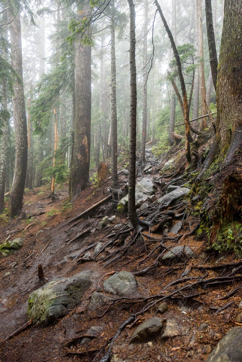 Saint Marks Summit Hike - Sept 2016 - Genny and Trail