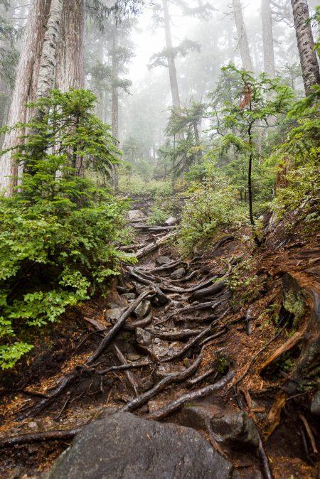 Saint Marks Summit Hike - Sept 2016 - Rooty Trail