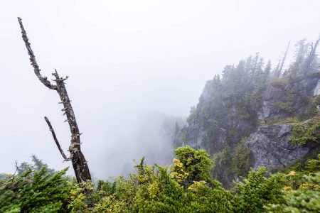 Saint Marks Summit Hike - Sept 2016 - Foggy Summit Stump