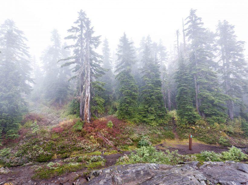 Saint Marks Summit Hike - Sept 2016 - Foggy Summit