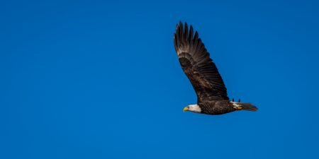 Squamish Bald Eagles : 2016-01-02 : Nikon D810 & Nikkor 200-500 : Going Somewhere