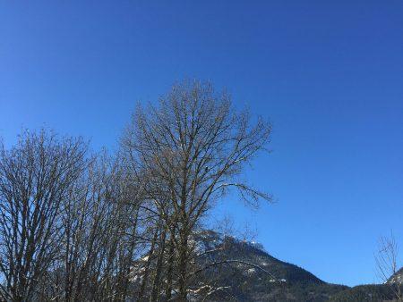 Squamish Bald Eagles : 2016-01-02 : iPhone Eagle Shot