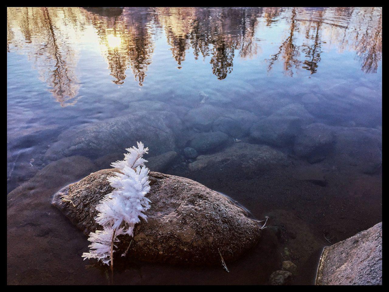 Squamish Bald Eagles : 2016-01-02 : iPhone Landscape